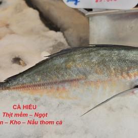 Cá Hiếu