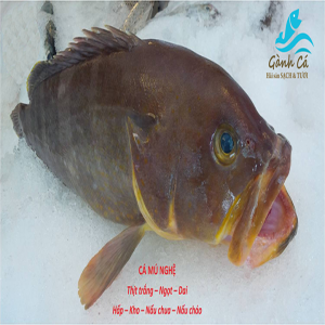 Cá Mú Nghệ