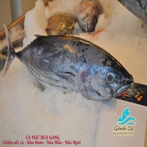 Cá Ngừ Dưa Gang