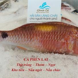 Cá Phèn Lai