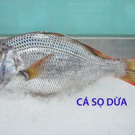 Cá Sọ Dừa